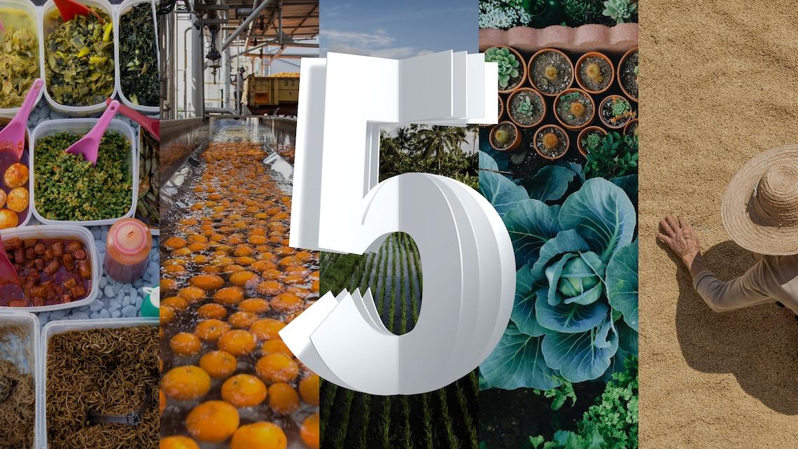 Agricultura é uma das áreas que vai beneficiar da tecnologia