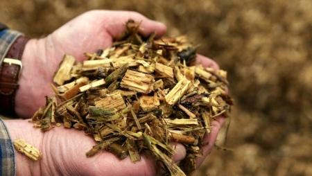 Projeto ibérico explora o potencial da biomassa