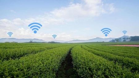Projeto de smart farming do ISQ distinguido pela Fujitsu