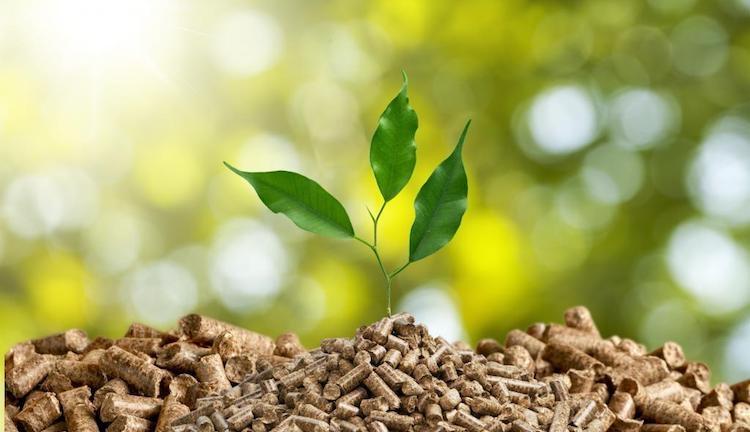 Espanha: aquecimento a biomassa reduz emissões em 40%