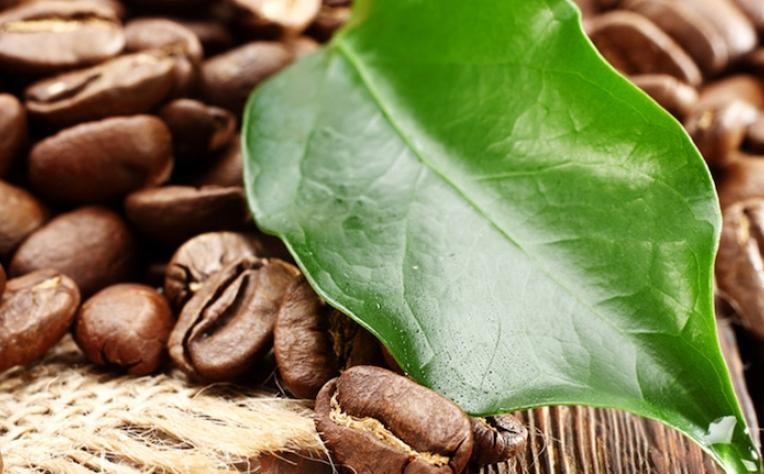 Starbucks assume compromisso de sustentabilidade
