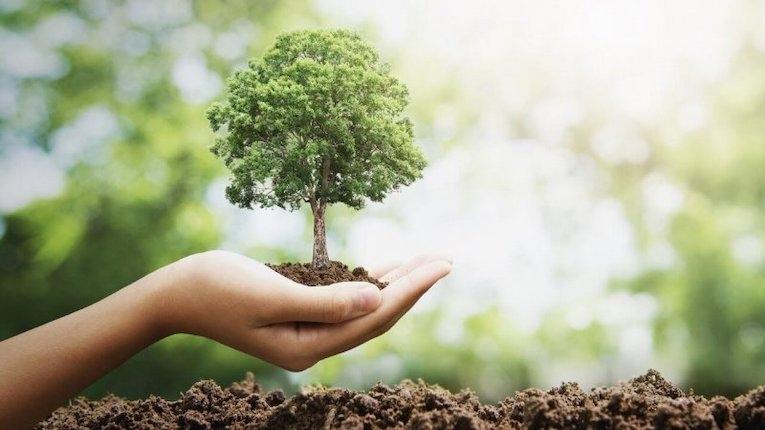 Soluções de IoT ajudam a prevenir incêndios florestais