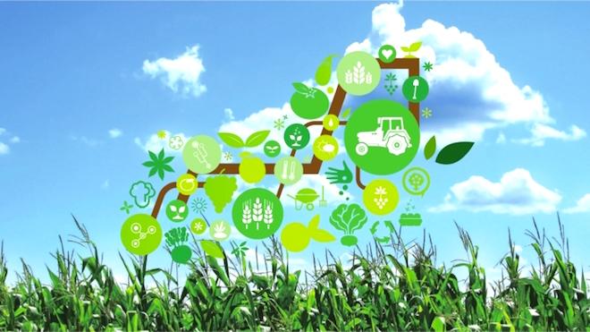 NEC desenvolve projeto de agricultura IoT em Portugal